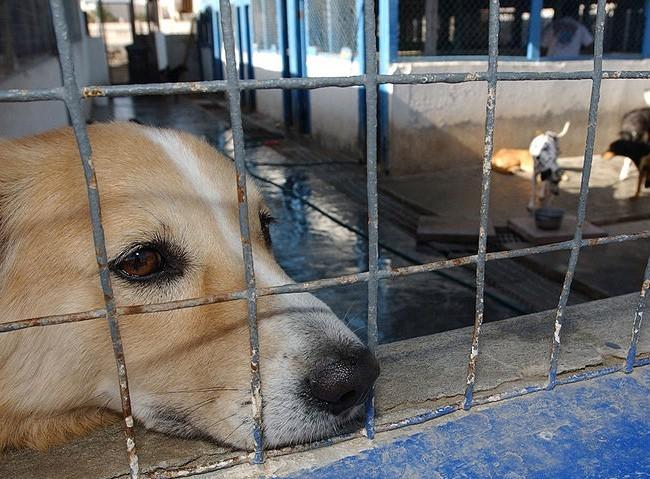 animalcruelty2